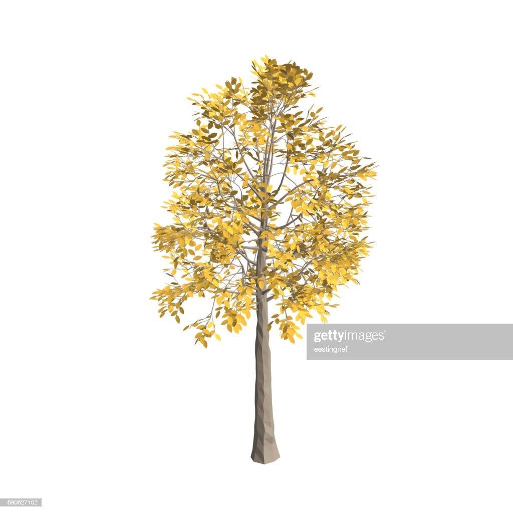 Aspen tree. Isolated on white background. 3d Vector illustration.