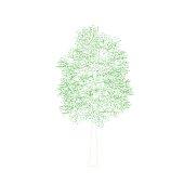 Aspen tree. Isolated on white background. Vector outline illustration.