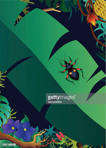 assassin bug in the jungle - assassin bug stock illustrations, clip art, cartoons, & icons