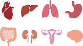 assembly internal organ icon set, vector