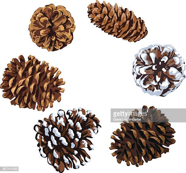 assorted pine cones illustration of various shapes and sizes - pine cone stock illustrations, clip art, cartoons, & icons