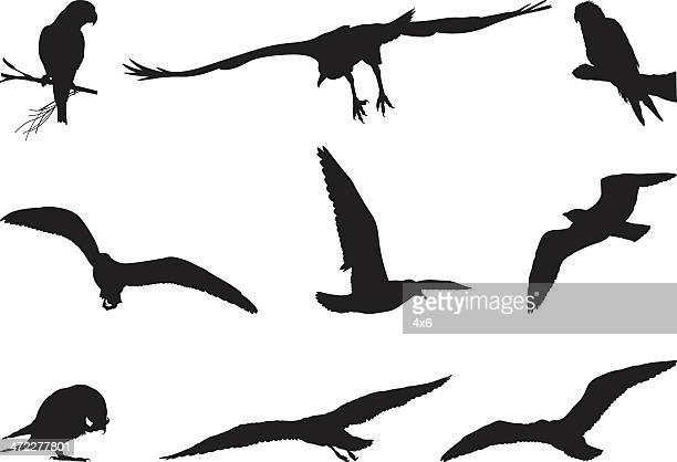 Surtido de siluetas de aves
