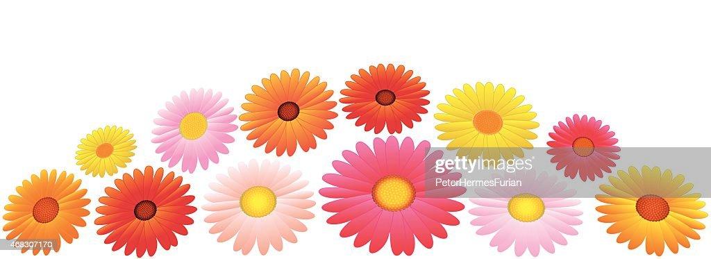 Asters Orange Pink Yellow Flowers Arrangement Vector Art Getty Images