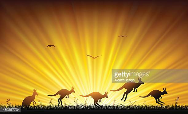 ilustrações de stock, clip art, desenhos animados e ícones de austrália pôr do sol - marsupial