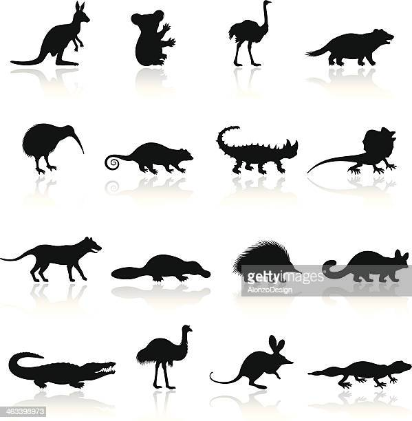 illustrations, cliparts, dessins animés et icônes de ensemble d'icônes animaux australiens - crocodile