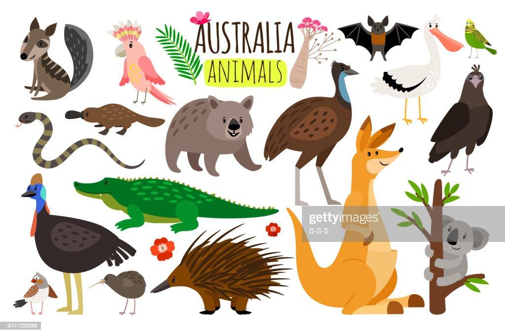 Australian animals. Vector animal icons of Australia, kangaroo and koala, wombat and ostrich emu