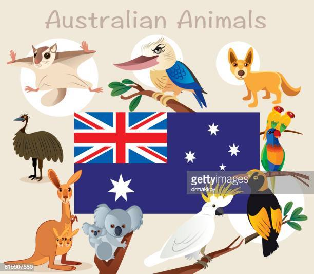 australian animals - melbourne stock illustrations