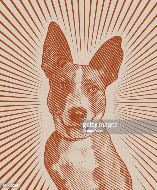 Australian Shepherd, Catahoula Leopard mixed breed dog waiting to be adopted