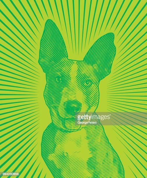 採用されるを待つ Catahoula Leopard 混合された品種犬オーストラリアン ・ シェパード
