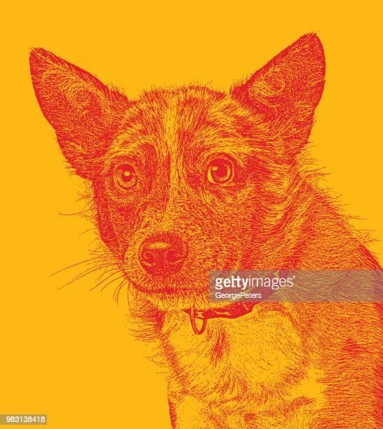 Australian Shepherd Dog hoping to be adopted