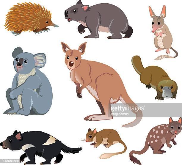 illustrazioni stock, clip art, cartoni animati e icone di tendenza di australian animali selvatici-fumetto - opossum