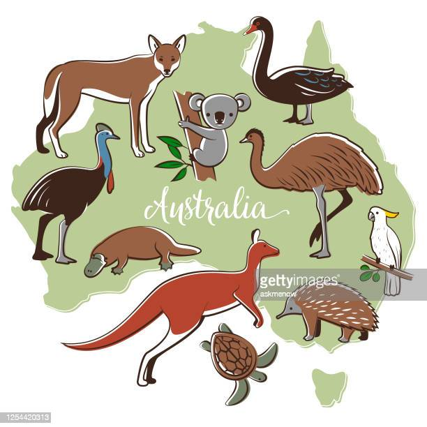 australian wildlife - duck billed platypus stock illustrations