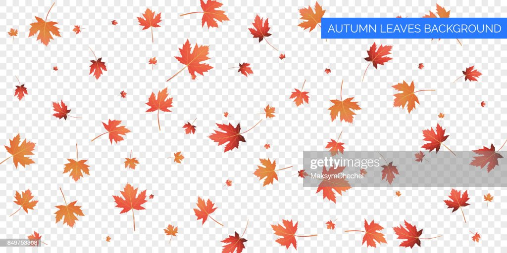Autumn background design. Autumn falling leaves on transparent background. Vector autumnal foliage fall of maple leaves.