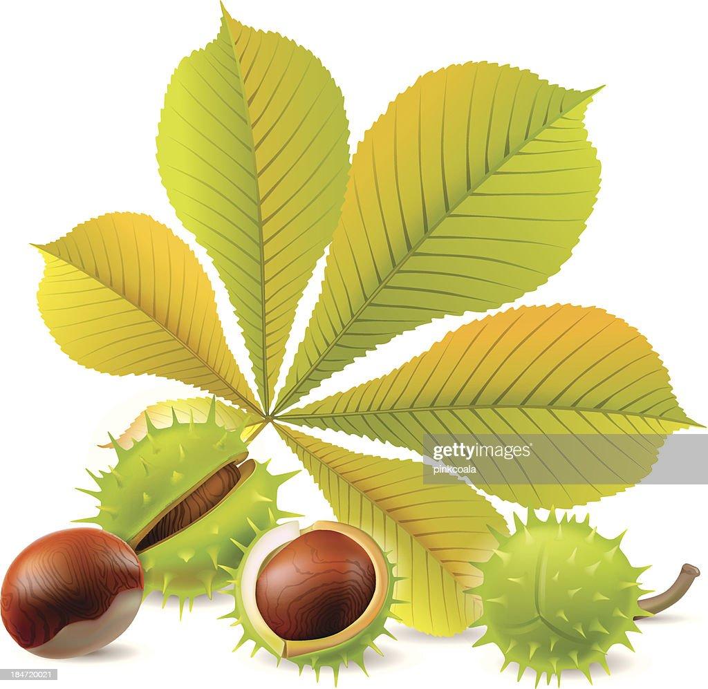 Autumn chestnuts