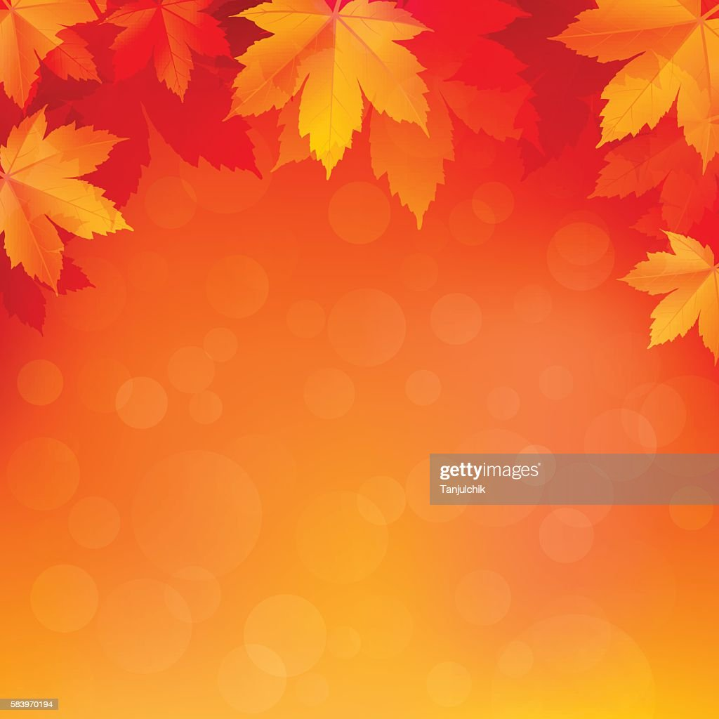 Autumn, fall background with bright golden maple leaves