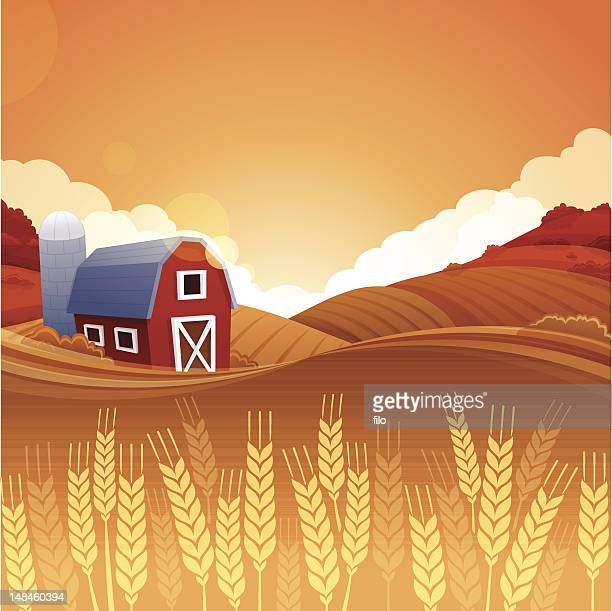 autumn harvest farm - corn crop stock illustrations, clip art, cartoons, & icons