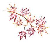 Autumn Japanese maple (Acer palmatum, fullmoon maple).
