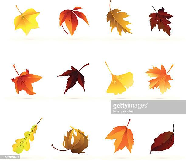 Autumn Leaf Icons
