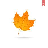 Autumn Leaf, Maple Leaf, Flat Style