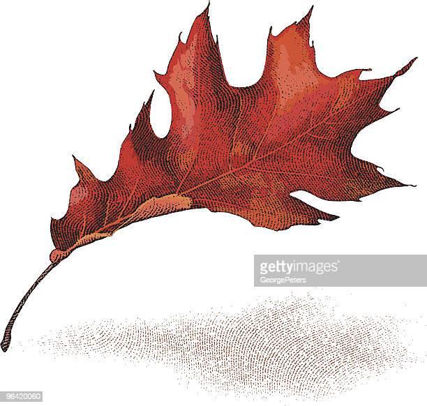 秋のリーフ - オークの葉点のイラスト素材/クリップアート素材/マンガ素材/アイコン素材