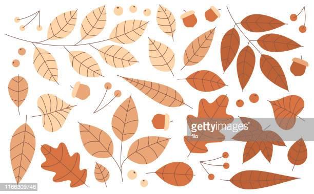 Autumn Leaves Acorns and Berries
