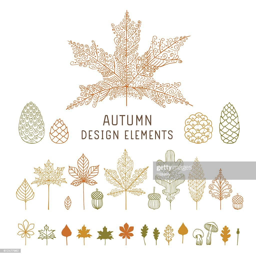 Autumn leaves and cones