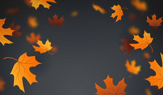 Autumn Leaves Background - gettyimageskorea