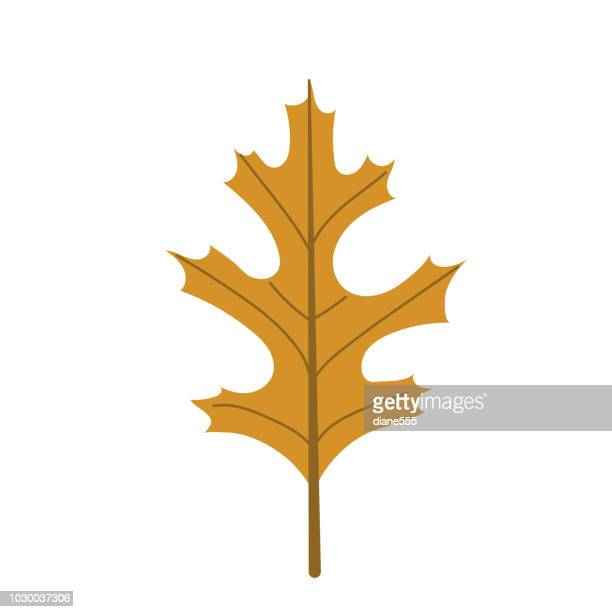 autumn leaves background with copy space - oak leaf stock illustrations