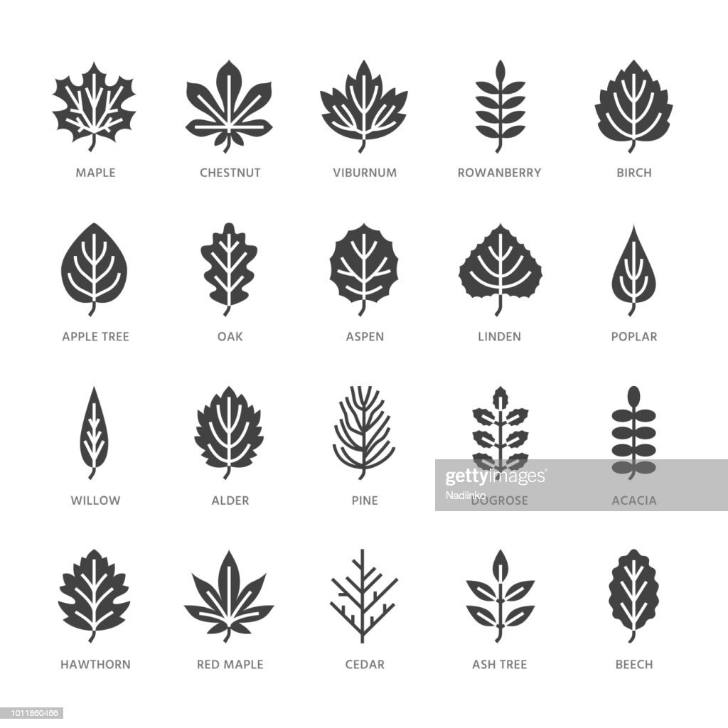 Autumn leaves flat glyph icons. Leaf types, rowan, birch tree, maple, chestnut, oak, cedar pine, linden, guelder rose. Signs of nature plants Solid silhouette pixel perfect 64x64