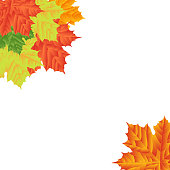 Autumn Leaves on a white background. Isolated. Vector illustration. Eps 10.