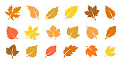 Autumn leaves set