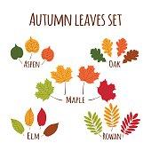 Autumn leaves set vector.