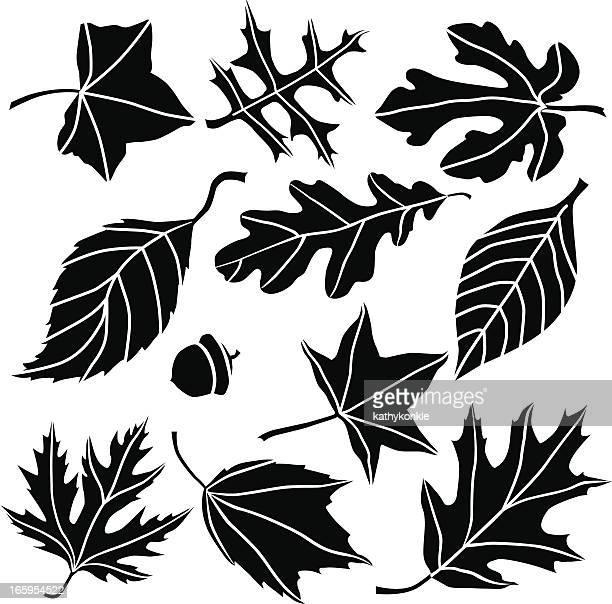 autumn leaves - oak leaf stock illustrations