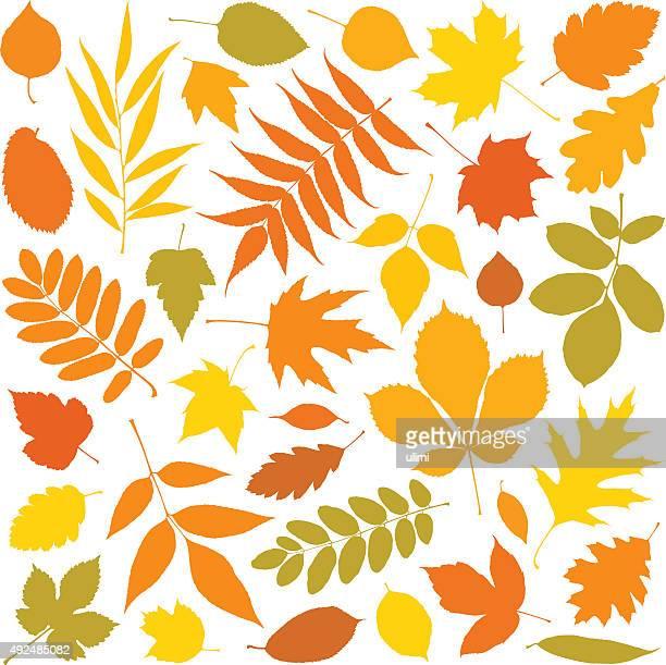 秋の落ち葉 - アカシア点のイラスト素材/クリップアート素材/マンガ素材/アイコン素材