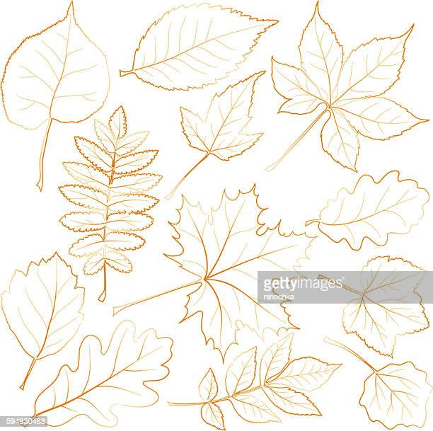 autumn leaves - ash stock illustrations, clip art, cartoons, & icons