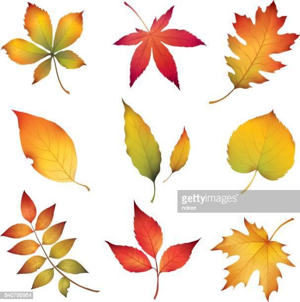 autumn leaves - autumn stock illustrations