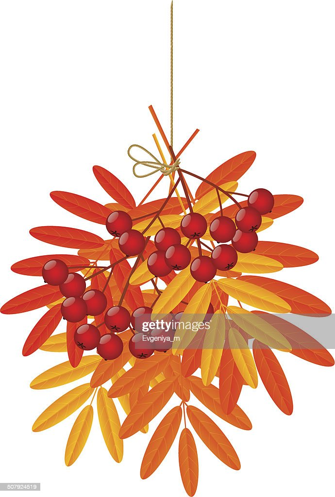 Autumn leaves with rowan on white background
