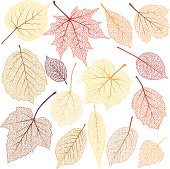 Autumn leaves with streak