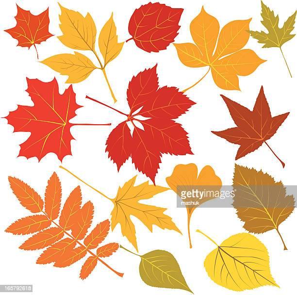 Hojas de otoño con las venas