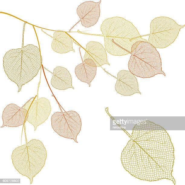 Autumn linden branch