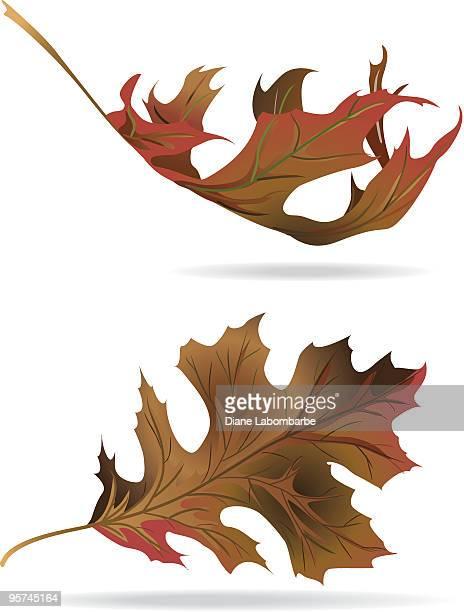 秋のオークの葉
