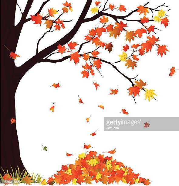 Autumn Tree And Pile of Leaves