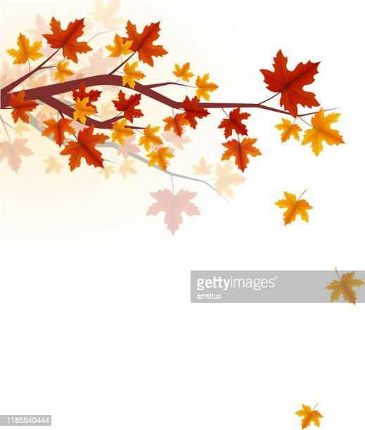 autumn tree branch - falling stock illustrations