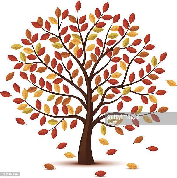 ilustrações de stock, clip art, desenhos animados e ícones de árvore de outono design - laranjeira