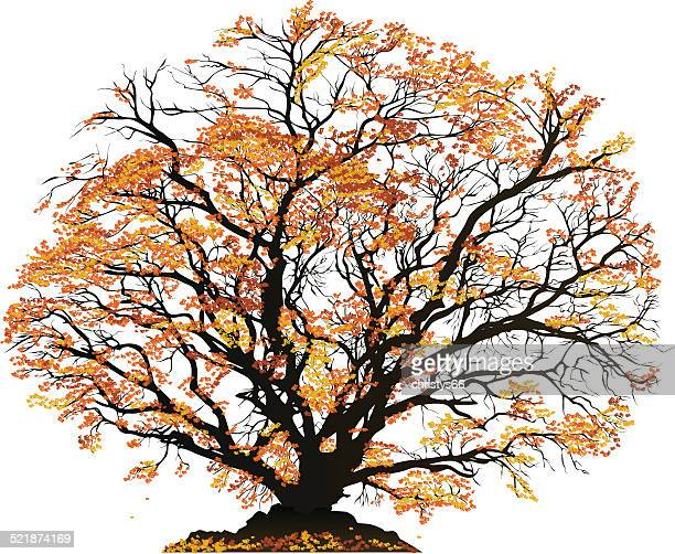 autumn tree - deciduous tree stock illustrations, clip art, cartoons, & icons