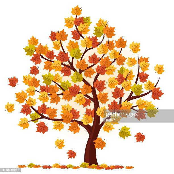 7 838 Iillustrations Cliparts Dessins Animes Et Icones De Arbre Automne Getty Images