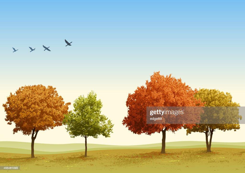 Autumn Trees : stock illustration