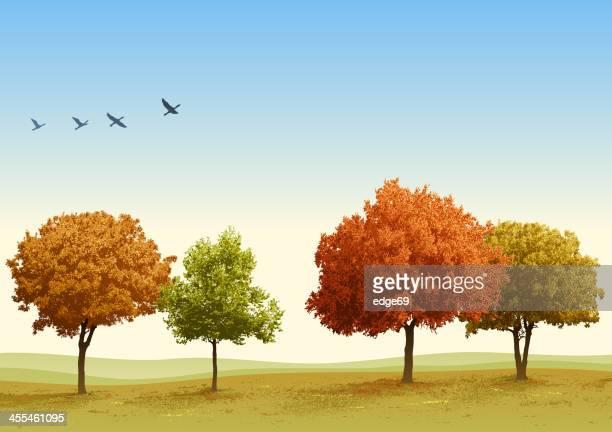 autumn trees - duck bird stock illustrations, clip art, cartoons, & icons