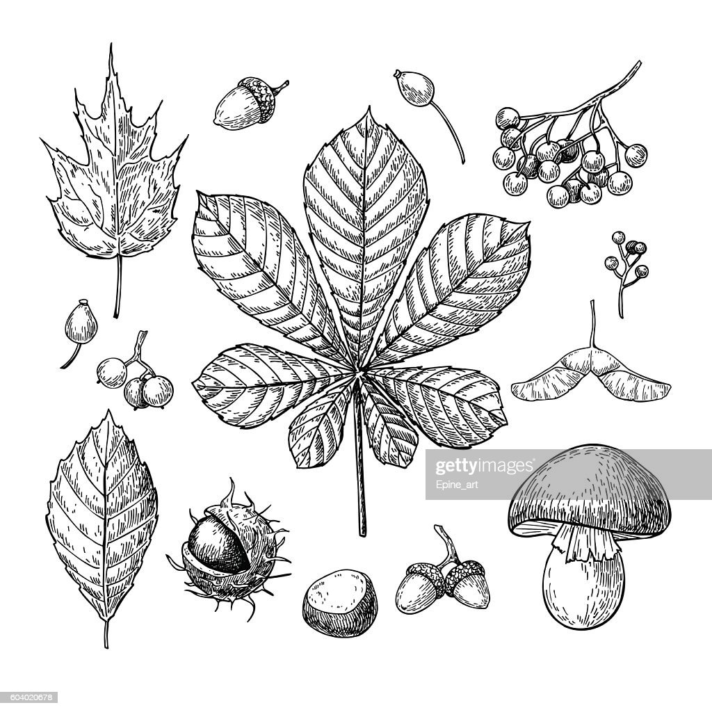 Autumn vector set with leaves, berries, chestnuts, nuts, mushroo