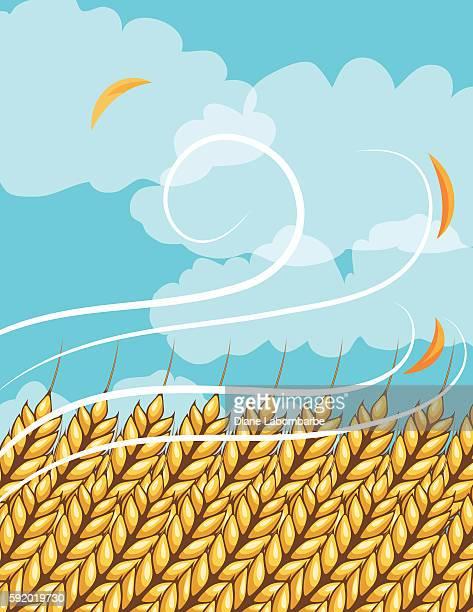 Autumn Wheat Field and Farm